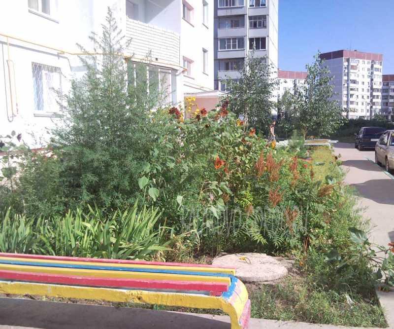 Садовые цветы фото клумб из покрышек
